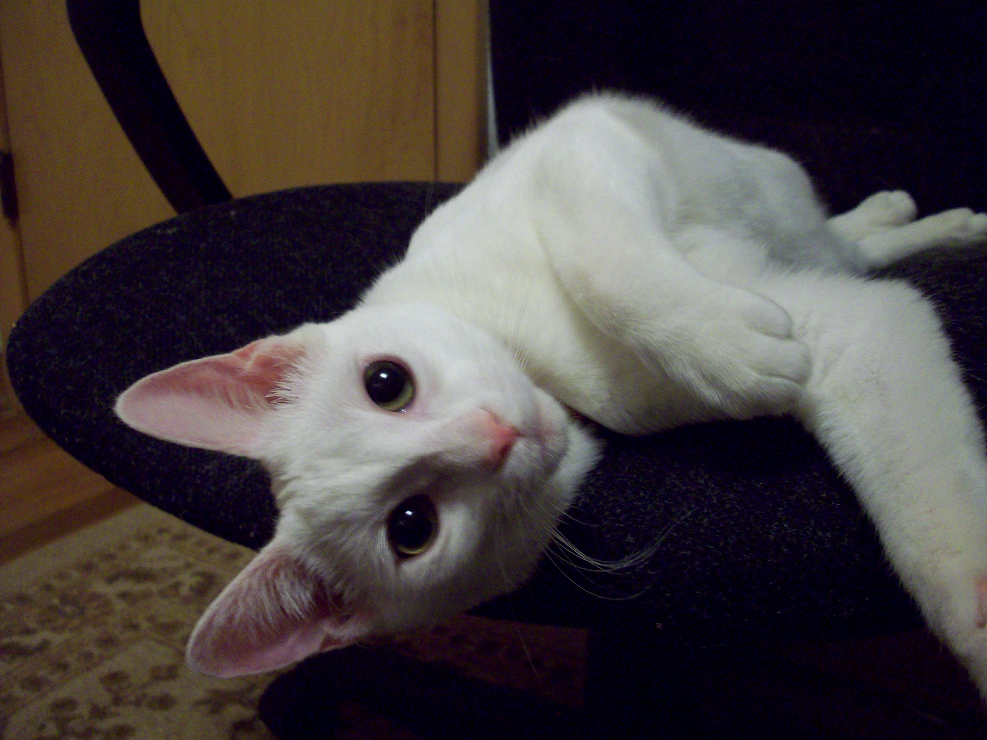 My little boy Quincy #welovewhitepets