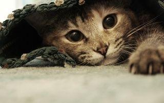 Süße Kätzchen-Hiding