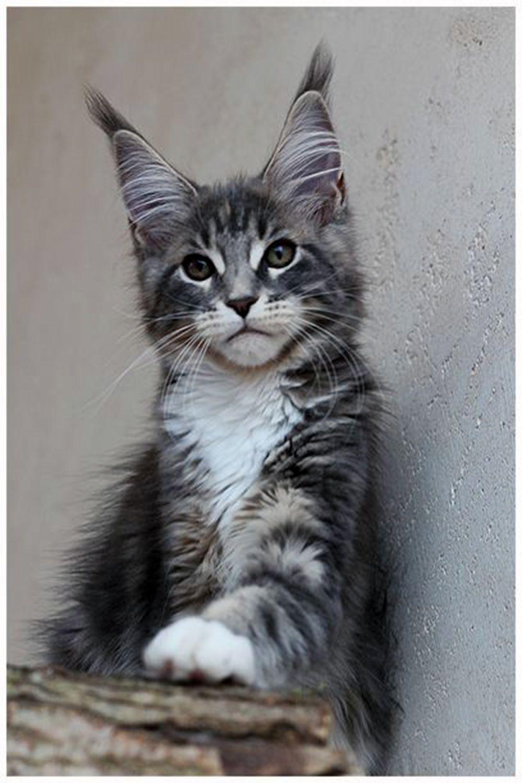 Pin on Cute Kitties