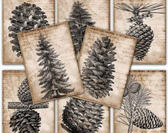 Vintage Pinecones gift tags