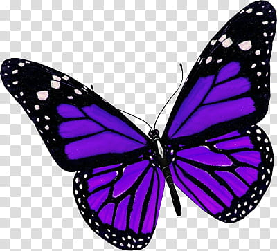 Recursos Purple And Black Butterfly Transparent Background Png Purple Butterfly Tattoo Black Butterfly Tattoo Purple Butterfly