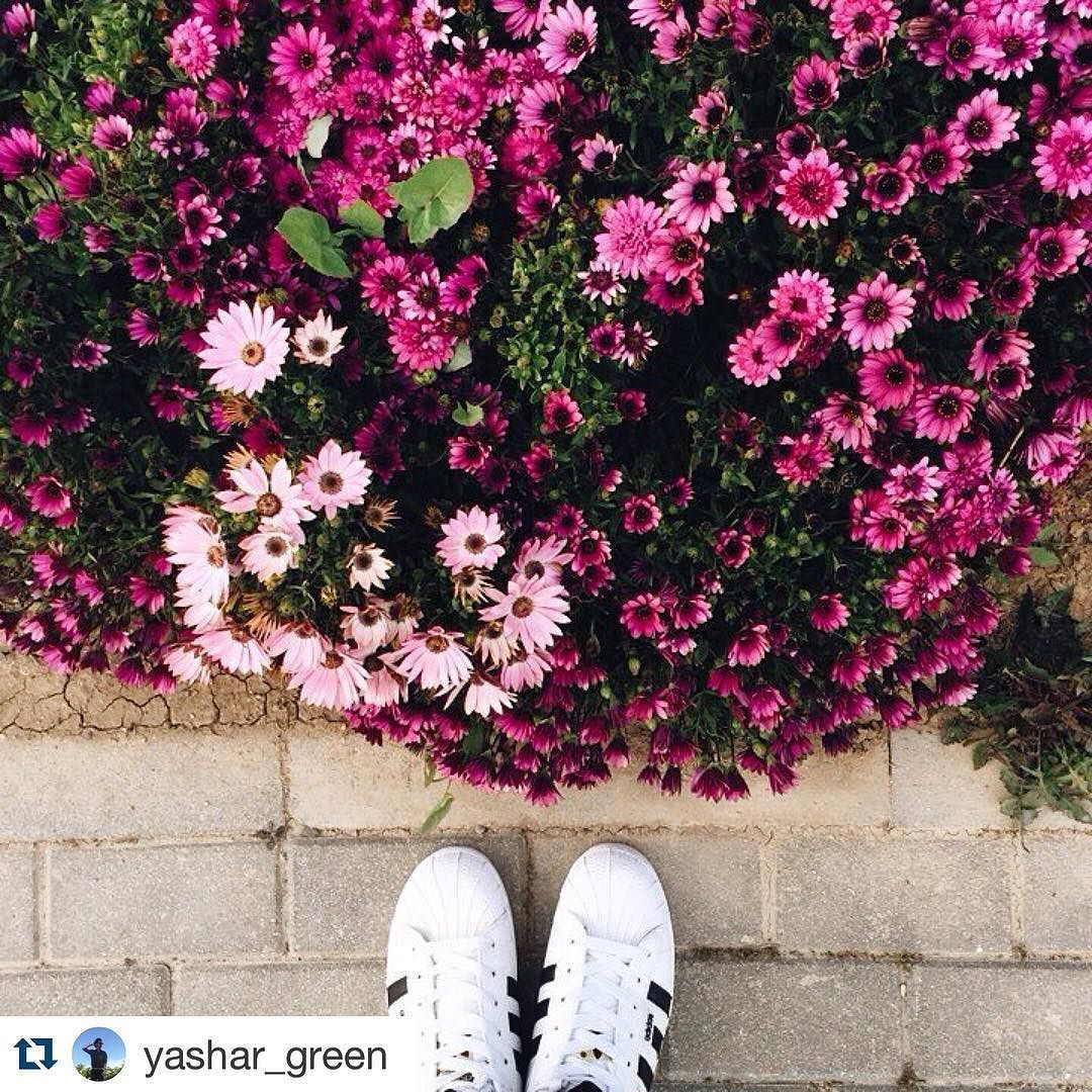#Repost @yashar_green with @repostapp.  #florist #ontheway #afternoon #walking #flowerslovers #fromwhereistand#fromwhereistandnow#flowers#bloom#pink#pinkflowers#viewpoint#beauty#friday#fridayhappiness#vsco#vscogood#vscocam#dailyphoto#photooftheday#adidassuperstar by from_whereistand_now