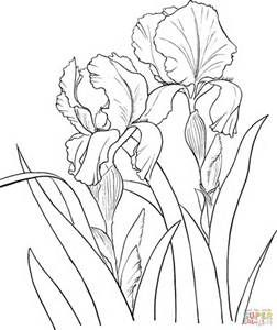 Line Drawings Of Irises Bing Images Iris Drawing Flower Drawing Flower Sketches