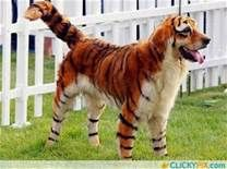 animal hybrids - Yahoo Image Search Results