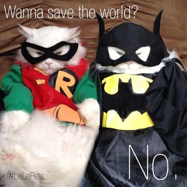 Superheros Batman Robin Cathumor Smeshnye Zhivotnye Zhivotnye Koshki