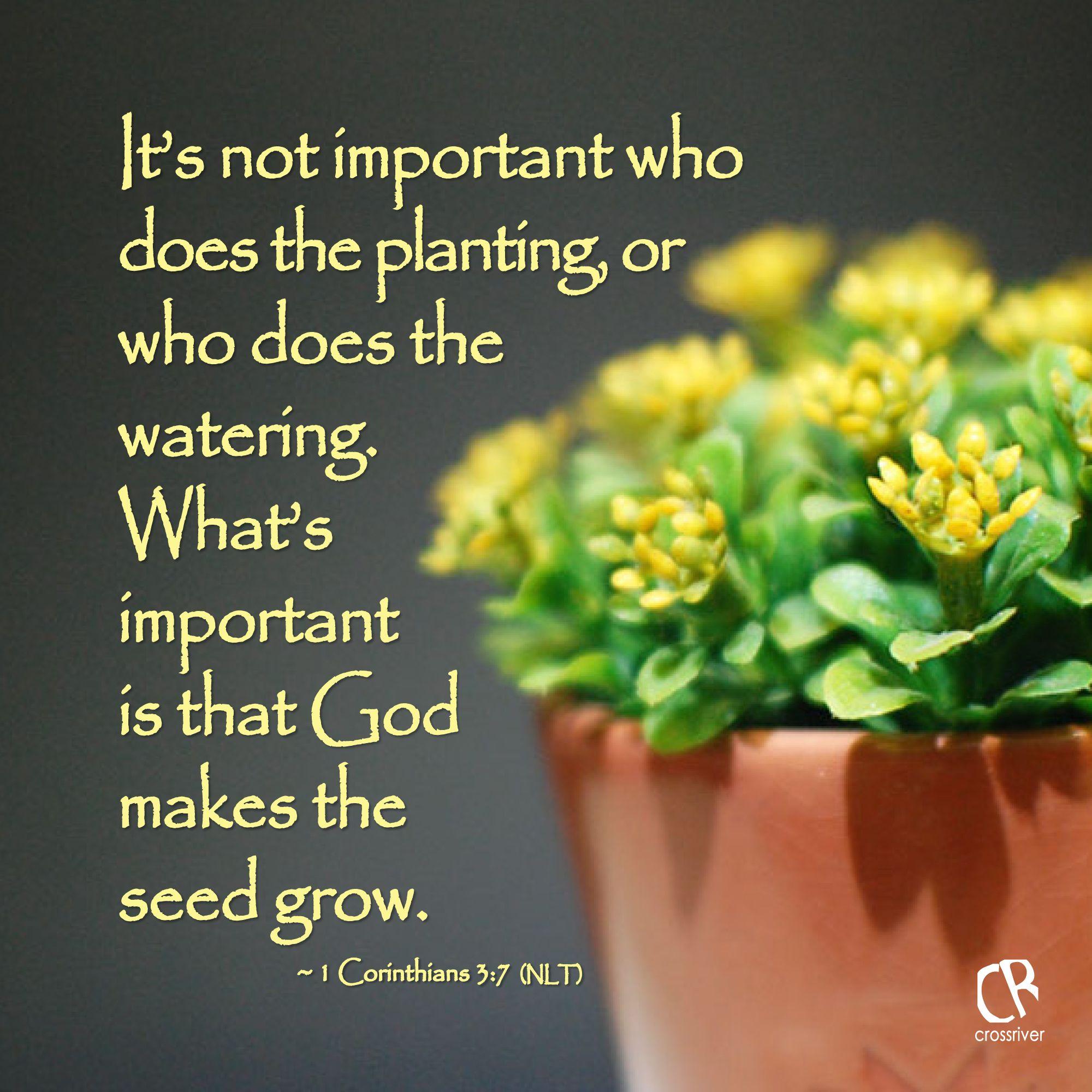 Quotes About Planting Seeds For Life 1 Corinthians 37  1 Corinthians  Pinterest  Corinthian
