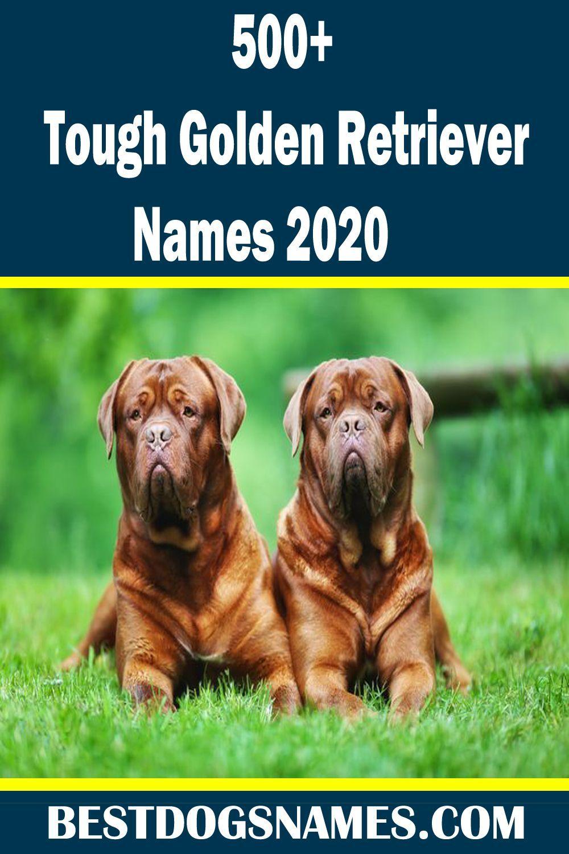 Tough Golden Retriever Names Golden Names Retriever Tough In 2020 Dog Breeds Best Dog Names Golden Retriever Names