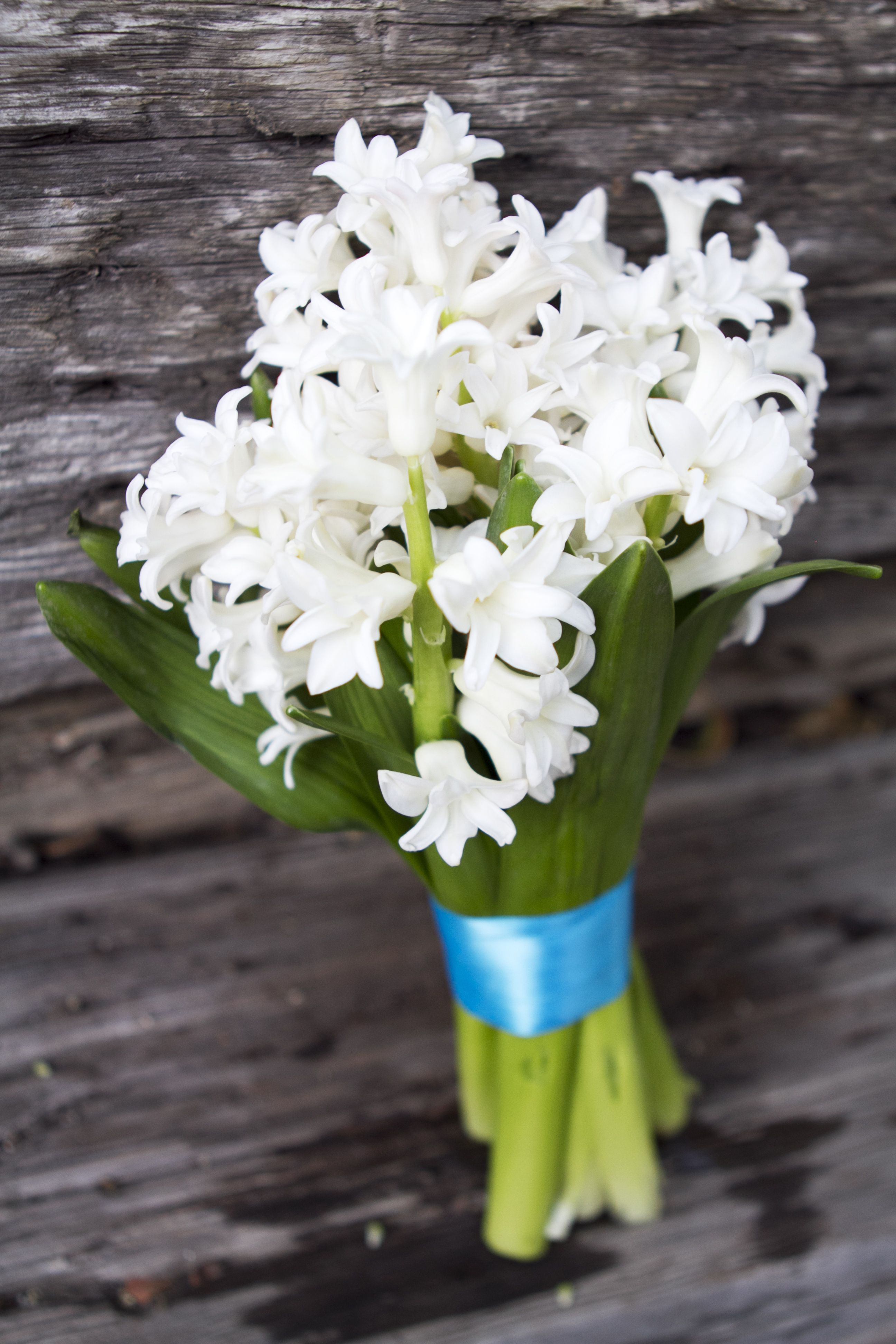Bouquet with white hyacinth and teal blue ribbon simply bouquets bouquet with white hyacinth and teal blue ribbon izmirmasajfo