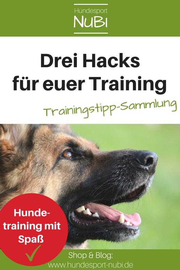 Die Besten Trainingstipps Fur Alltag Und Hundesport Blogparade Hundesport Hundchen Training Und Hunde