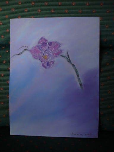 Orchidée Phalénopsis