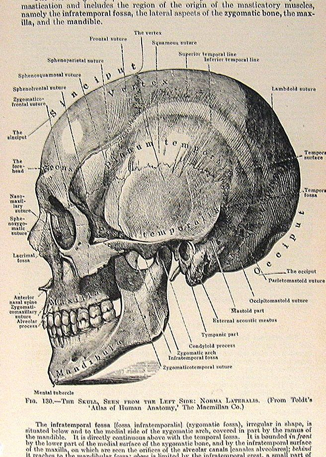 Pin de Shravan Shenoy en Project X | Pinterest | Anatomía, Anatomía ...