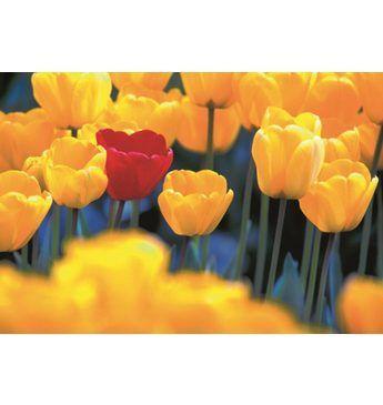 Home affaire Leinwandbild »Rote Tulpe«, 118/78 cm Jetzt bestellen unter: https://moebel.ladendirekt.de/dekoration/bilder-und-rahmen/bilder/?uid=e743d61b-d358-507f-9797-62654689c03e&utm_source=pinterest&utm_medium=pin&utm_campaign=boards #bilder #rahmen #dekoration
