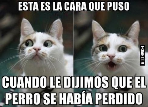 Memes En Espanol Buscar Con Google Funny Spanish Memes Stupid Memes Animal Memes