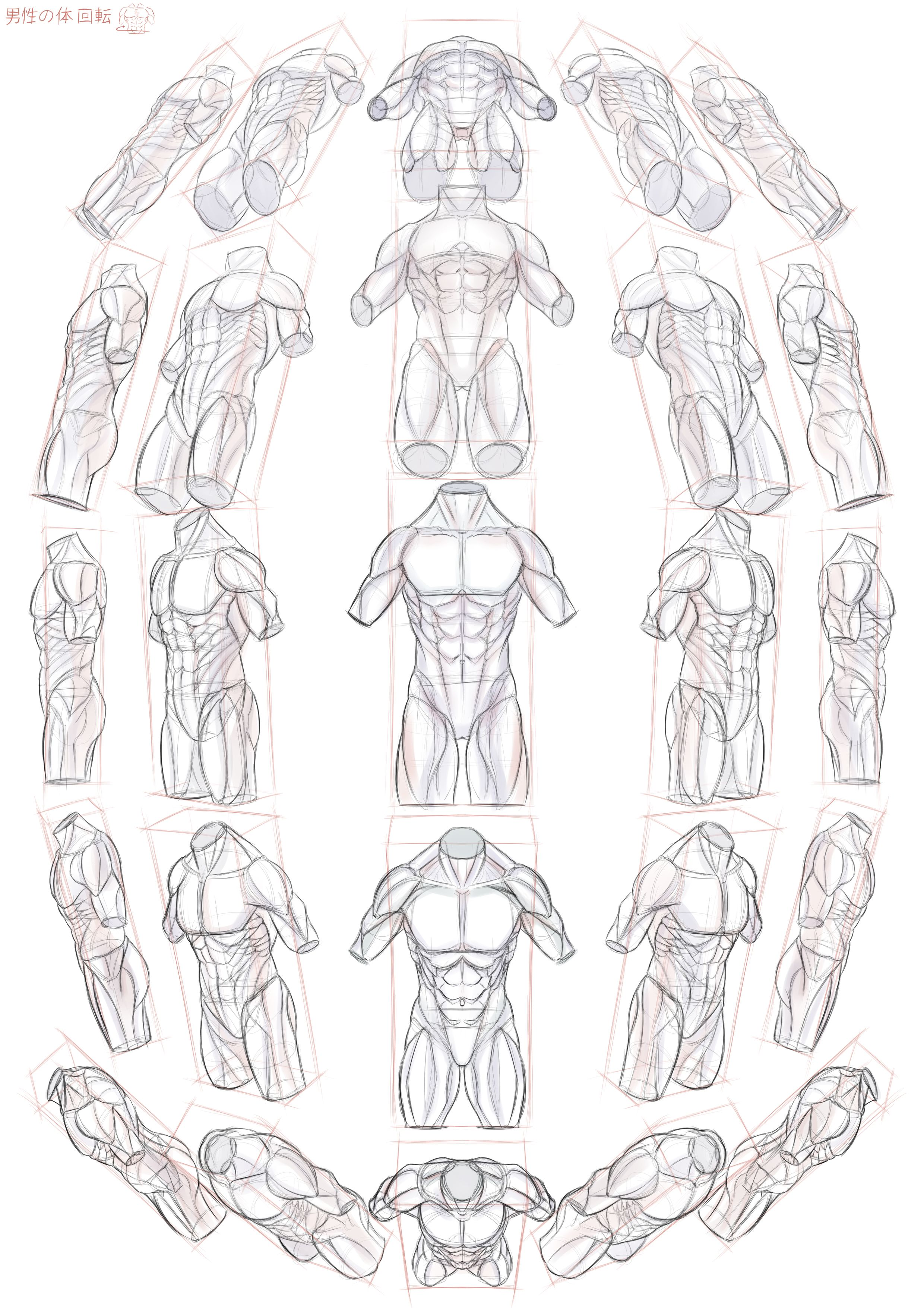 Pin By Coco Nucifera On Anatomy Pinterest Drawings Art And Sketches