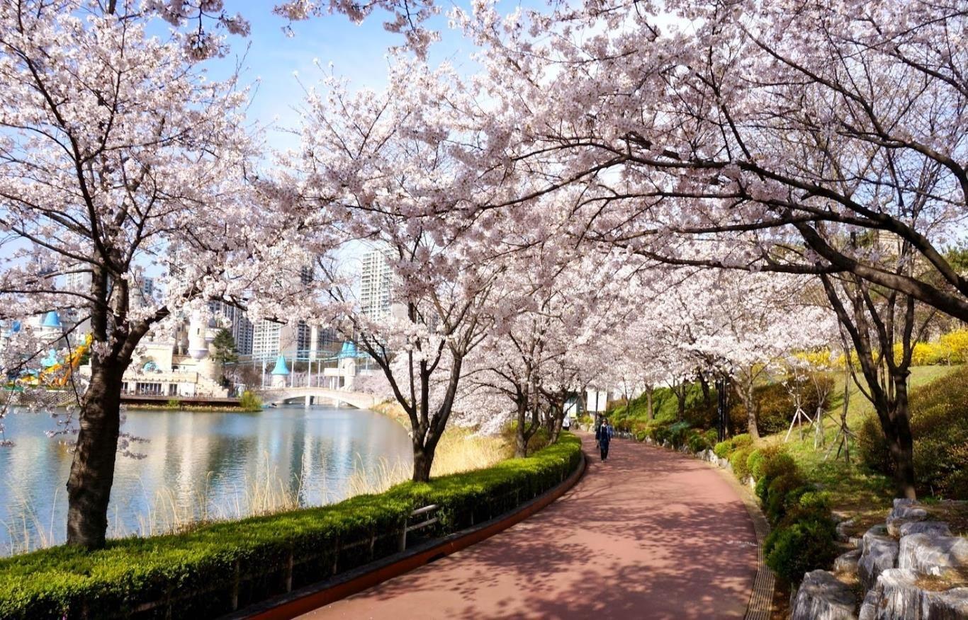 2 Seokchon Lake Hoa Anh đao Du Lịch Phong Cảnh