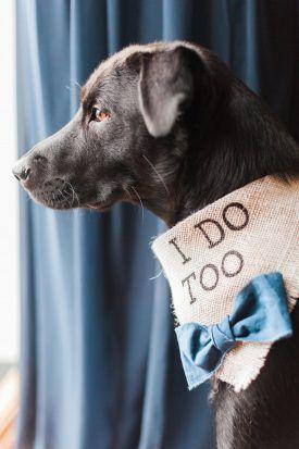 Dog Ring Bearer City Tavern Club DC Wedding Meagan