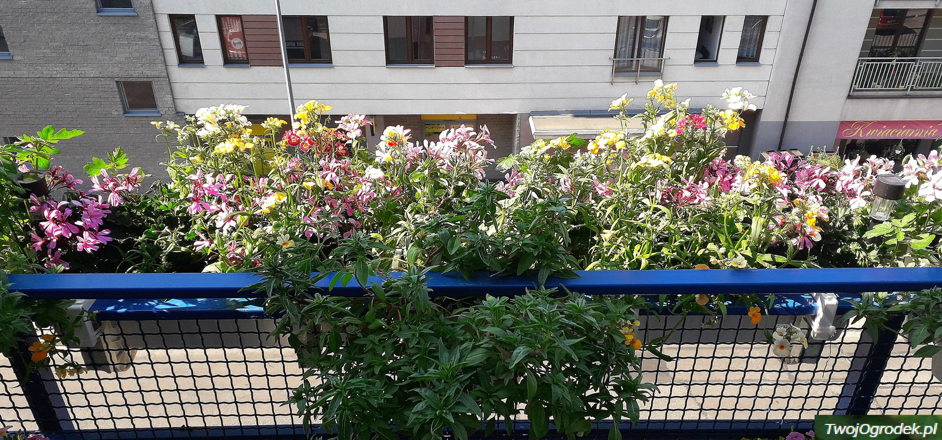 Kwiatowe Inspiracje Plants