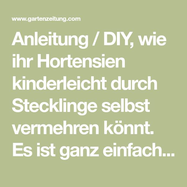 Hortensien durch Stecklinge vermehren – gewusst wie!