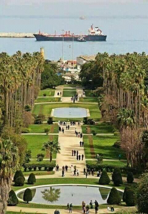 Jardin D Essai Du Hamma Alger Algerie Beautiful Places Places