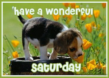 Image result for nice saturday images with pets