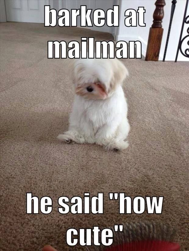 Barked At The Mailman Funny Cute Memes Adorable Dog Pets Meme Lol Funny Quotes Funny Sayings Humor Funny Funny Animal Quotes Funny Cute Memes Animal Humor Dog