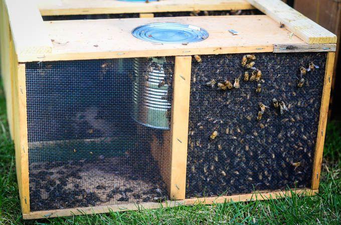 Beekeeping 101: Hiving The Bees and Homemade Sugar Syrup April 27, 2014