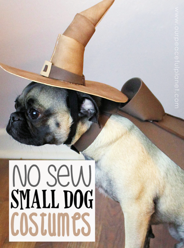 Small Dog Halloween Costume Patterns Our Peaceful Planet Dog