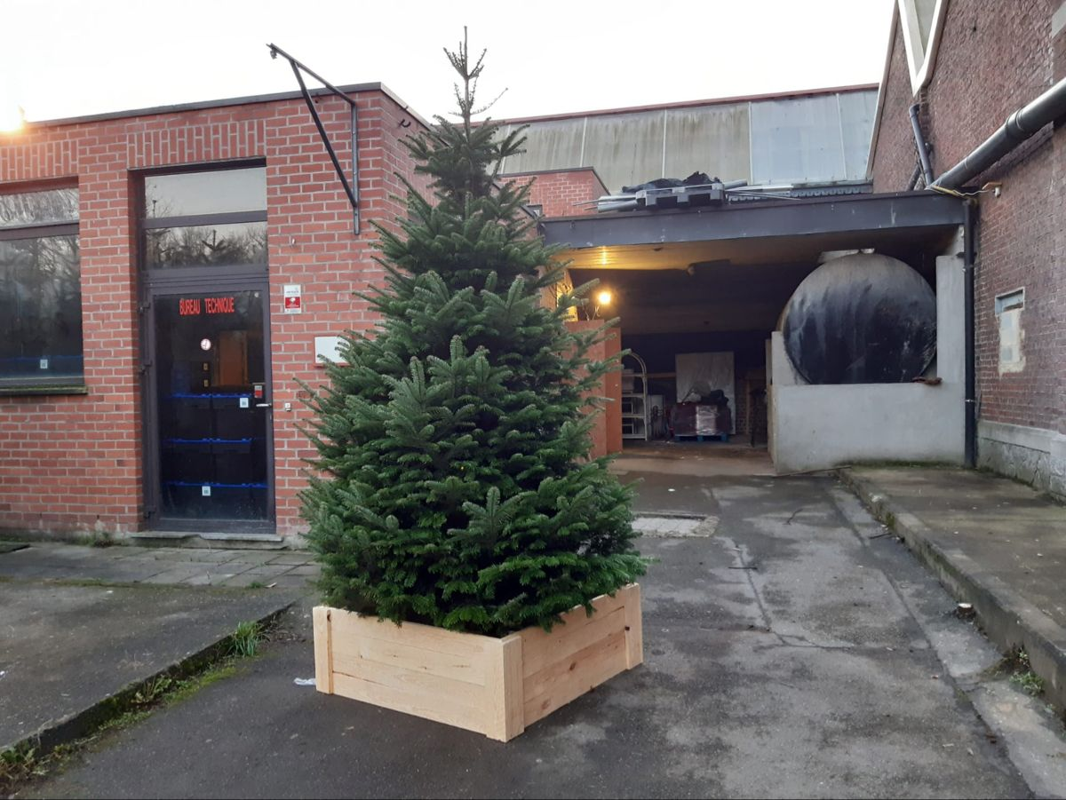 nordmann kerstboom 2020 Sapin nordmann 3m in 2020