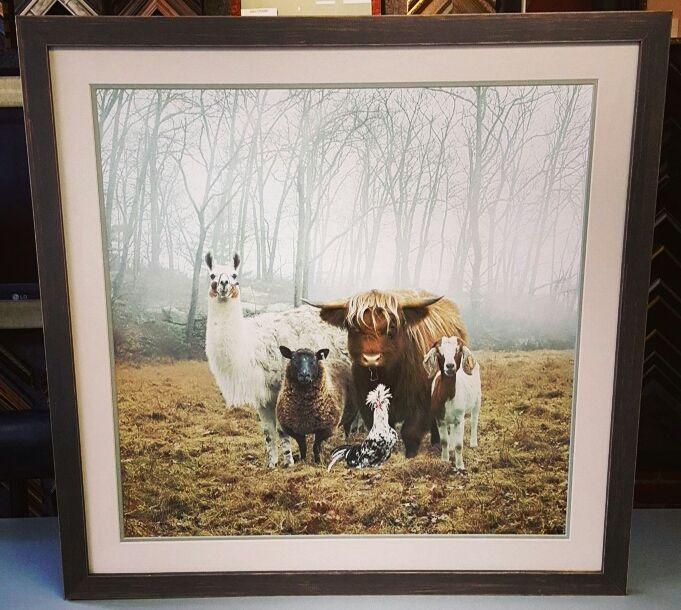 Petting zoo photograph custom framed with acid-free cotton rag mats ...
