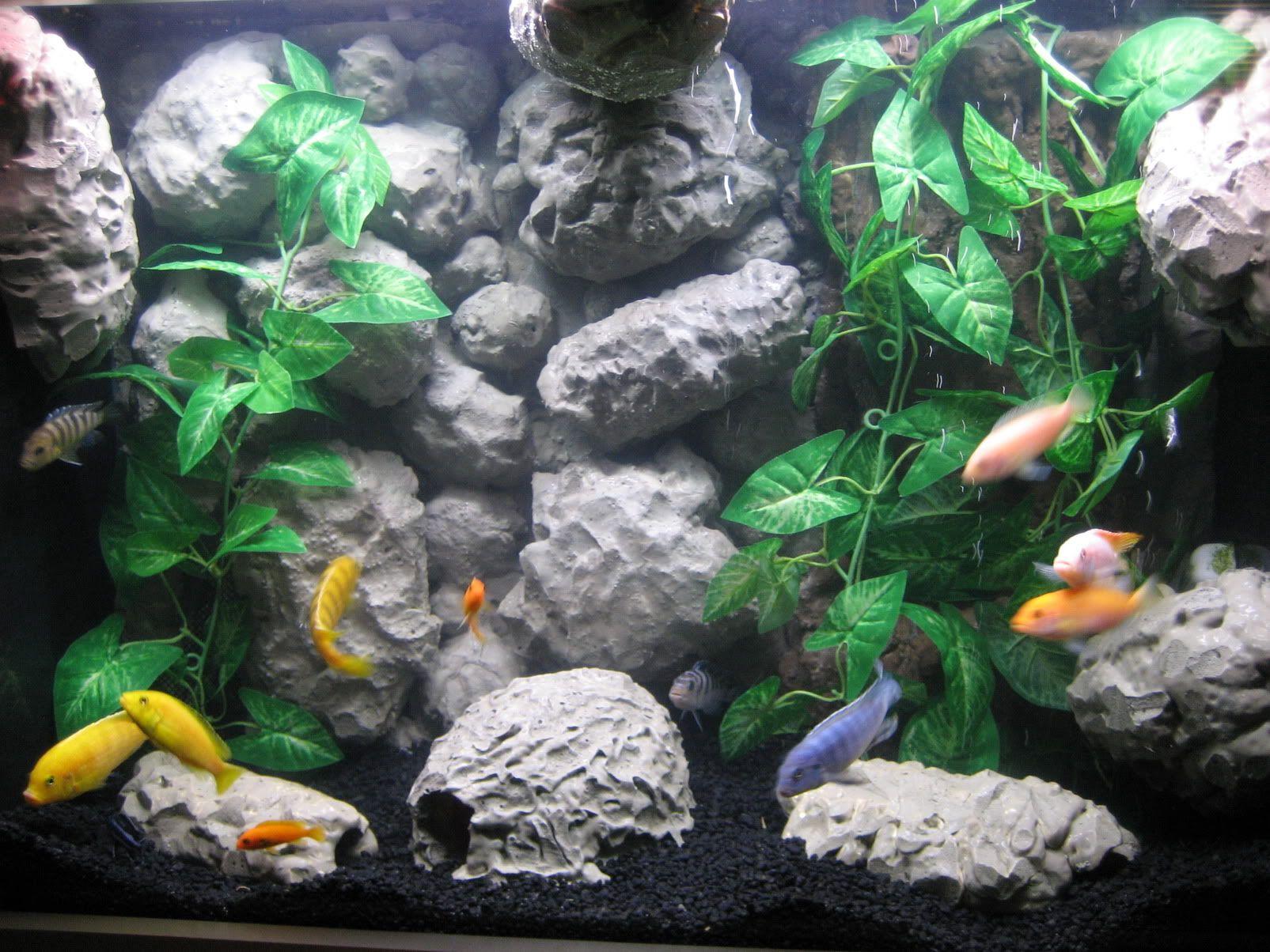 aquarium desktop background jpg 1605 1204 fish pinterest fish