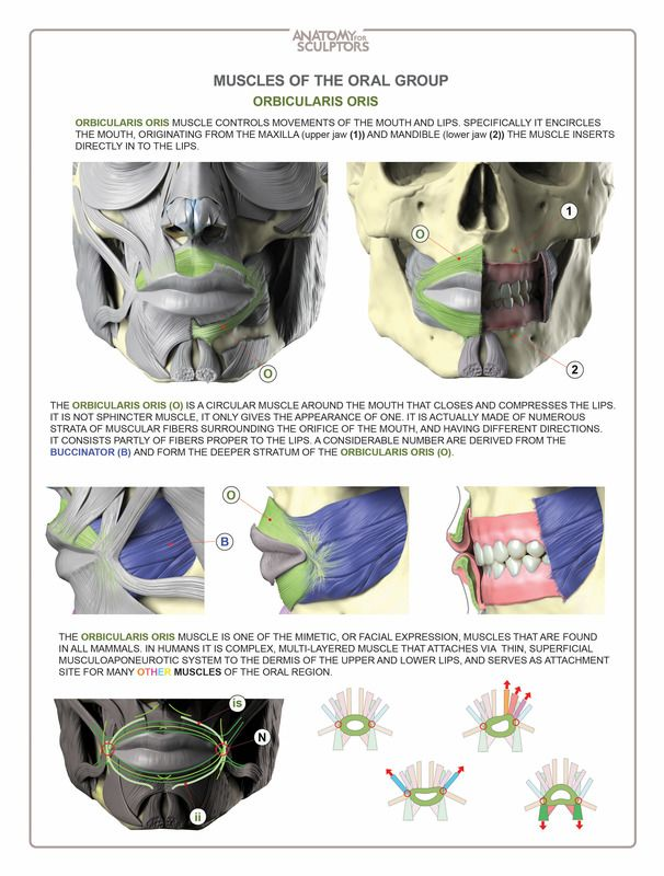 Anatomy Next Store Anatomy Of Facial Expression Delivery April
