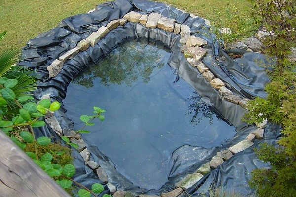 Our Natural Swimming Pond Build: Snakes and Ladders | swimming pools ...