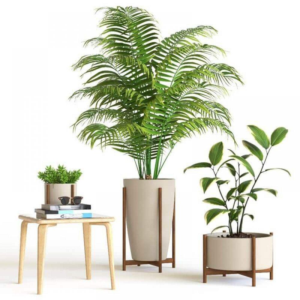 Decorative interior plant 3d model Plants, Interior