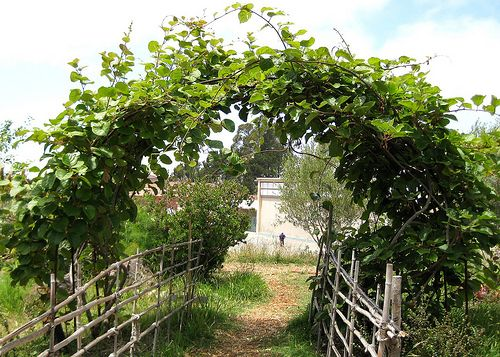 Image result for kiwi dome garden