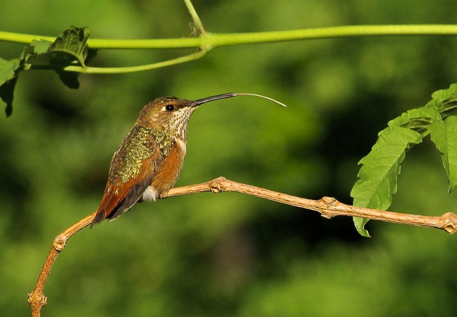 Pin en Birds