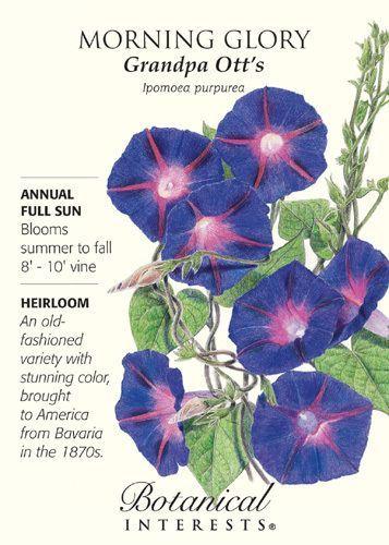 Grandpa Ott S Morning Glory Seeds 1 5 Gram Morning Glory Seeds Garden Vines Morning Glory Flowers