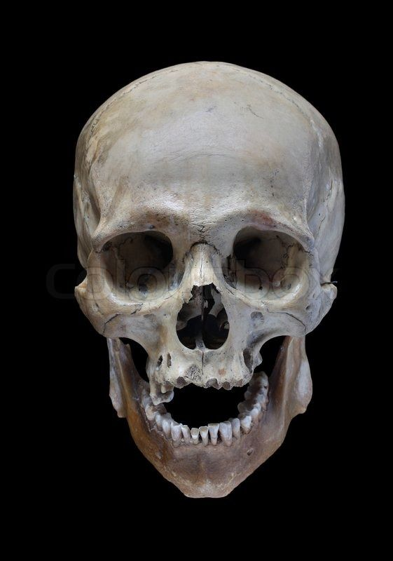 Stock Image Of Skull Of The Person On A Black Background Skulls