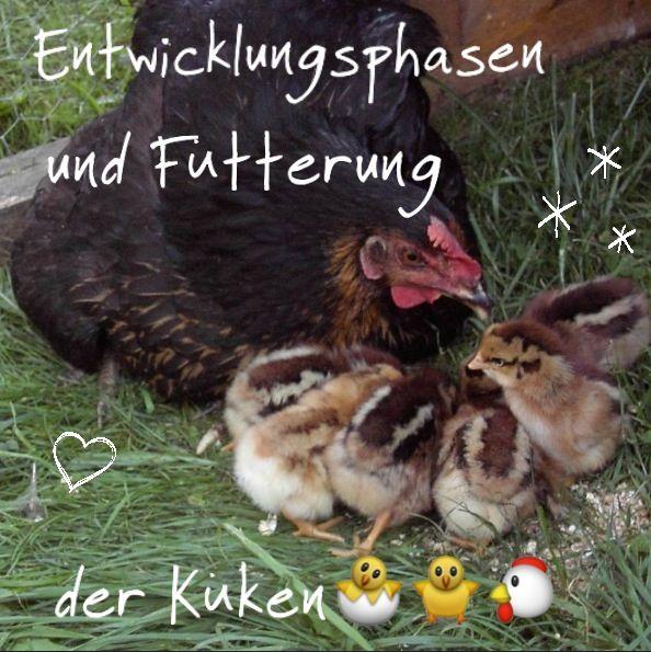 Enten Schnecken Fressen Garten: Pin Von Horselove💚=🐎=💚 Auf Hühner