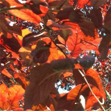 thumbnail cromatografia con hojas rojas