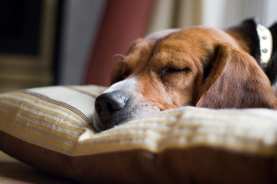 Pin By Alicjapatelka On Animals Sleeping Dogs Stop Dog Barking