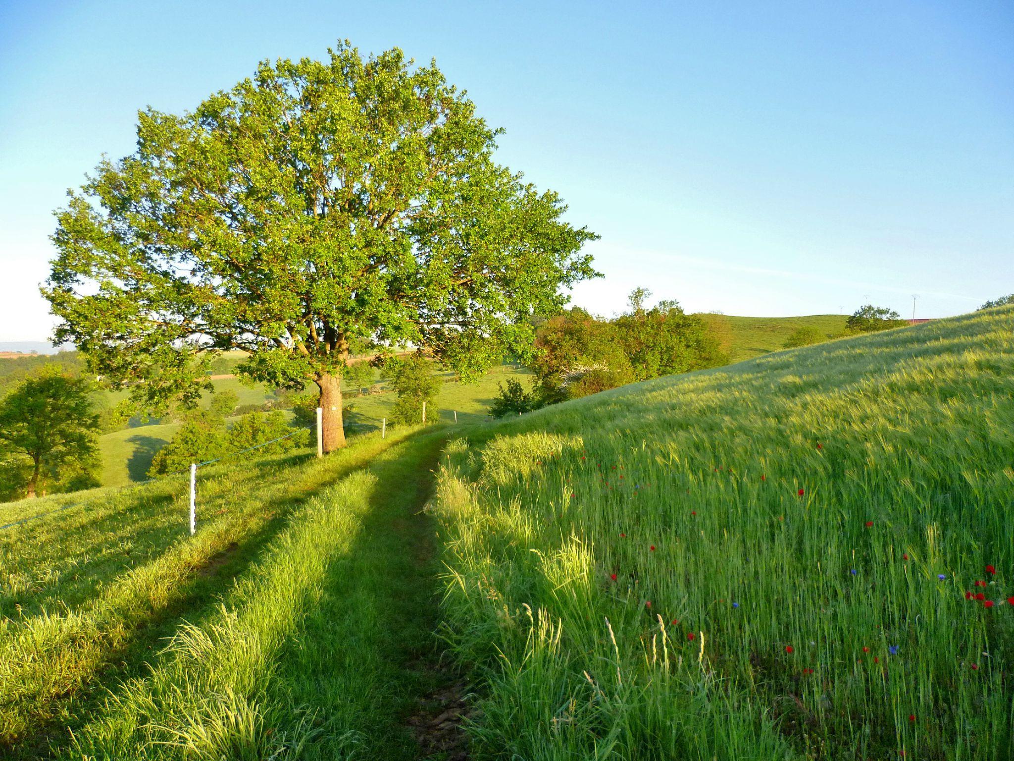 Walk through fields Promenade à travers les champs