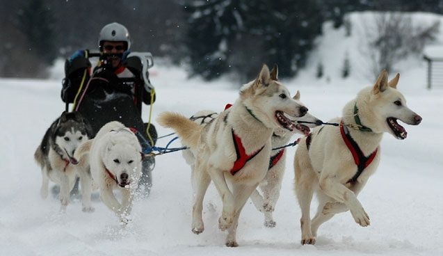 Dogsled Races In Ashton Idaho Longest Running Dog Sled Race In