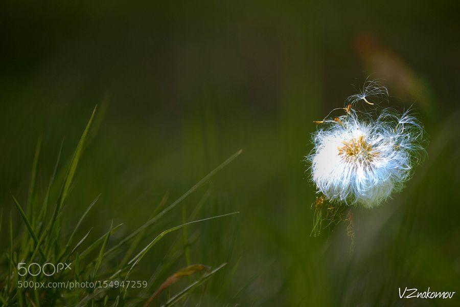 Flowers by v_znakomov. @go4fotos