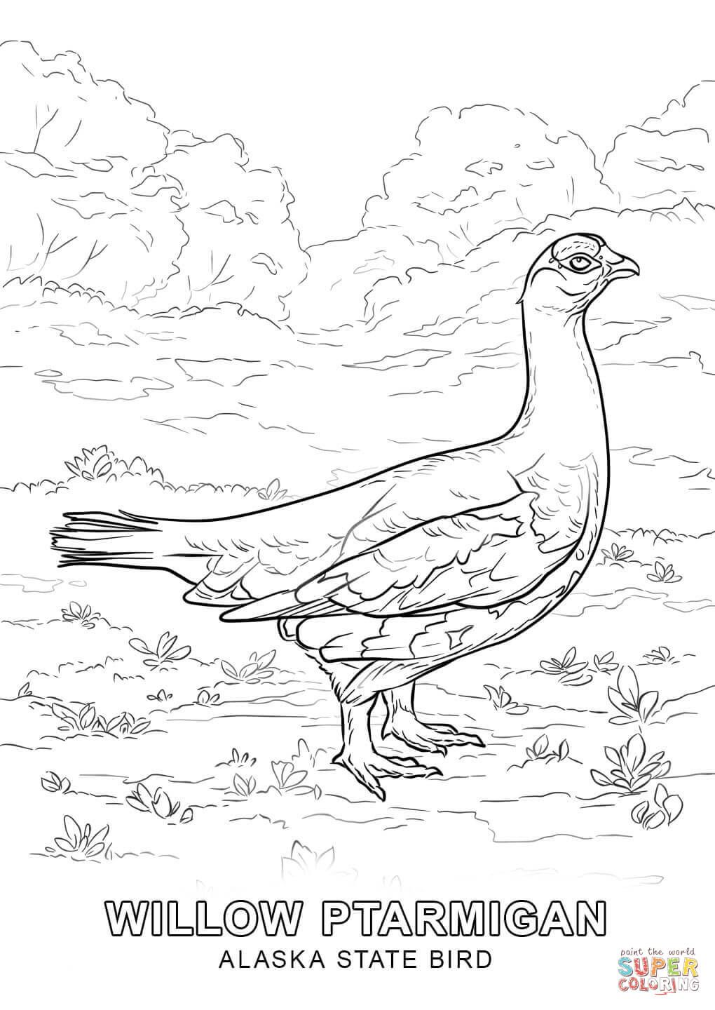 Alaska State Bird Coloring Page From Category Select 27252 Printable Crafts Of Cartoons Nature Animals Bible And Many More