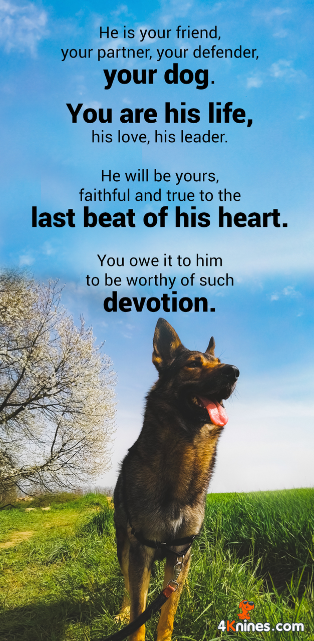 He Is Your Friend Your Partner Your Defender Your Dog Dogs Dog Love Dog Quotes