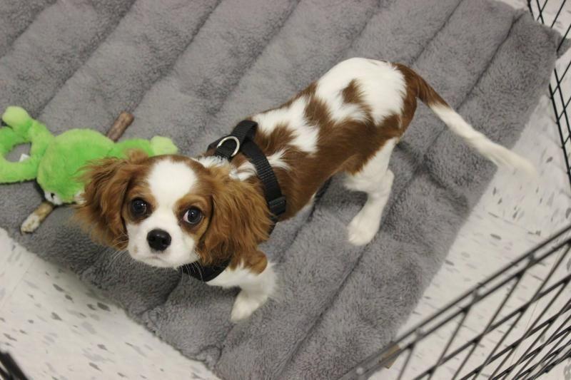 Adopt Boomer On Petfinder Dog Adoption Pets Dog List
