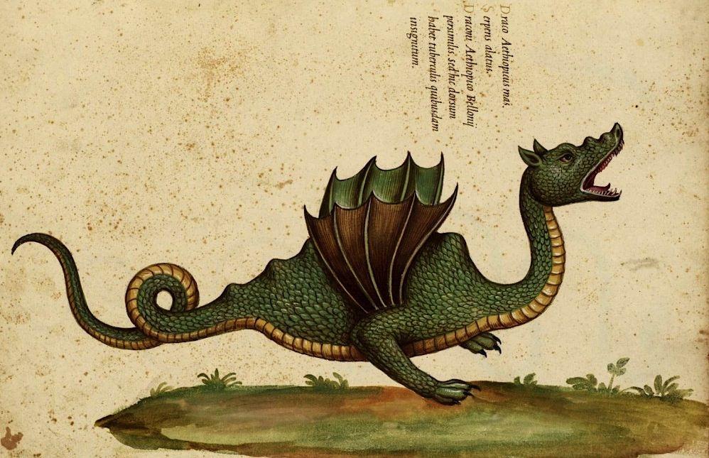 Draco Bipes 1541
