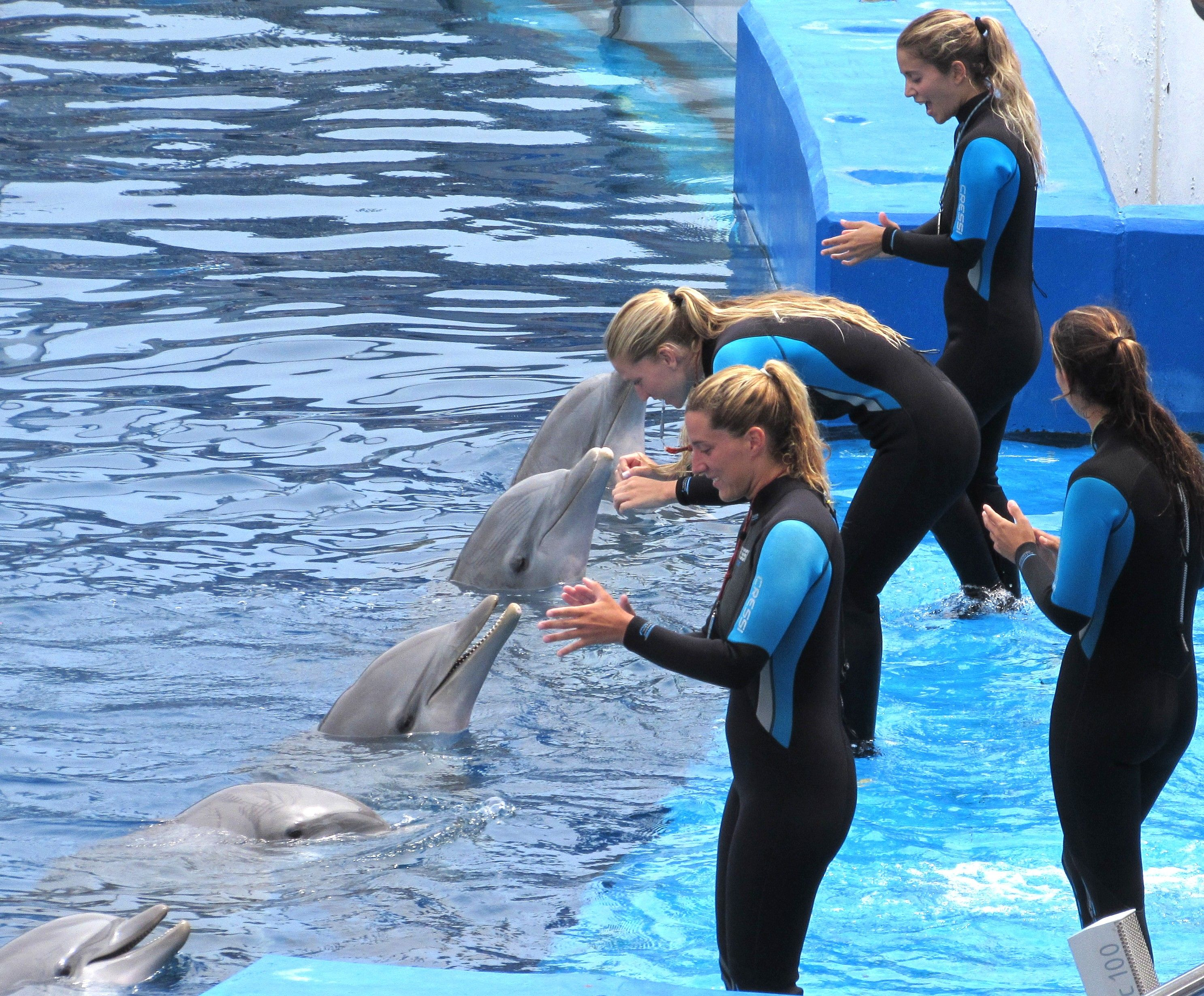 Dolphin Lineup Marine Biology Jobs Marine Biology Wildlife Biologist