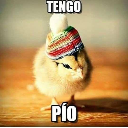 Pin De Paola Rios En Humor Memes De Frio Imagenes Chistosas De Frio Memes Divertidos