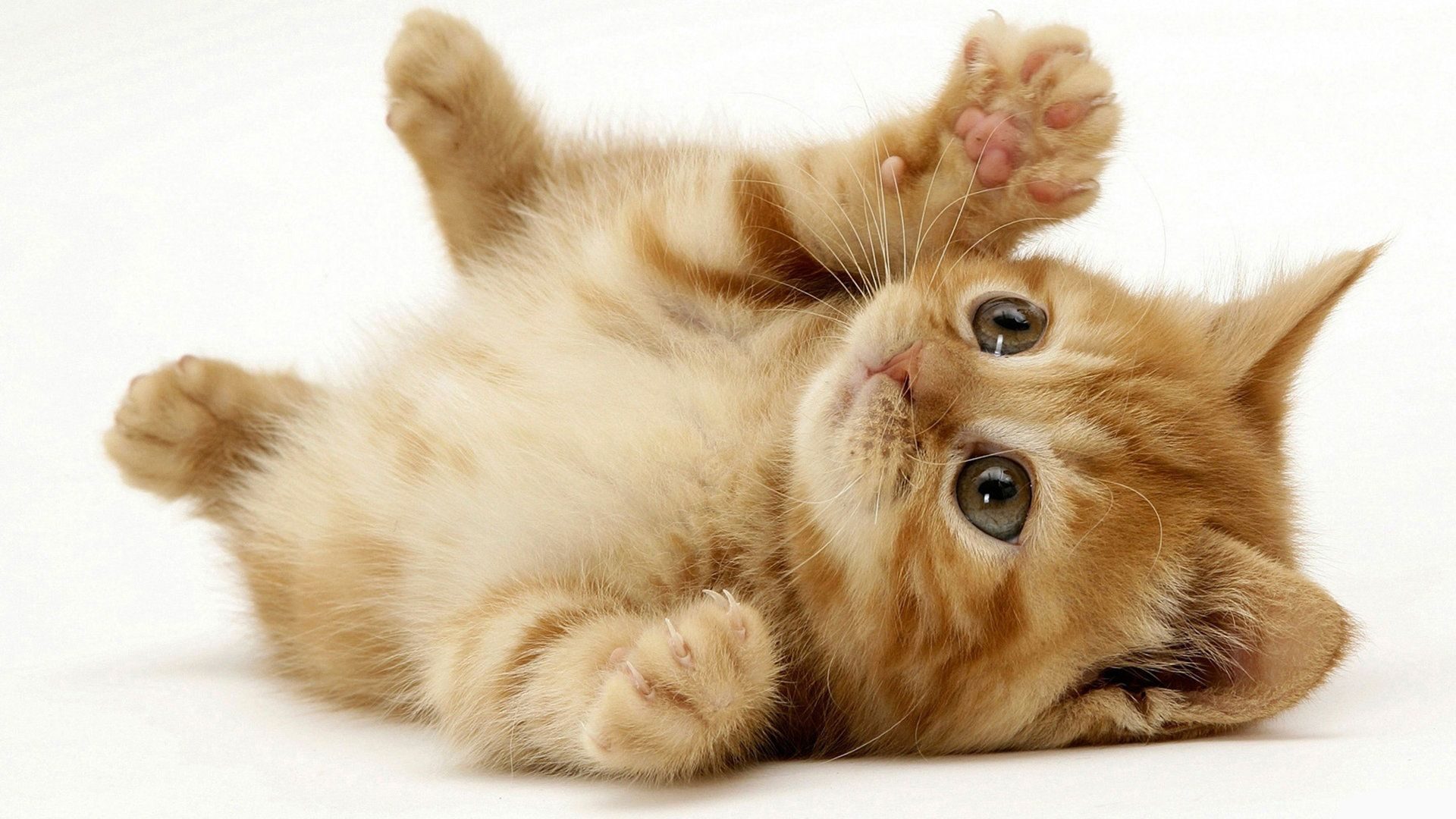 Here S A High Resolution Image Of A Kitten 3 Kittens Cutest Cute Animals Cute Cats